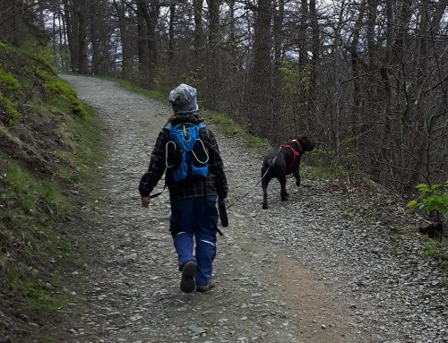 Harzer Wandernadel – So ist die ganze Familie aktiv
